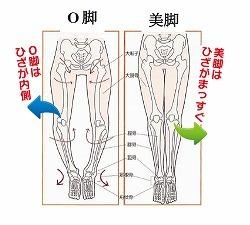 o_bone.jpg
